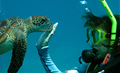 Snorkeler playing with a sea turtle
