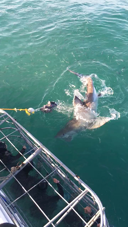 Shark cage diving in South Africa