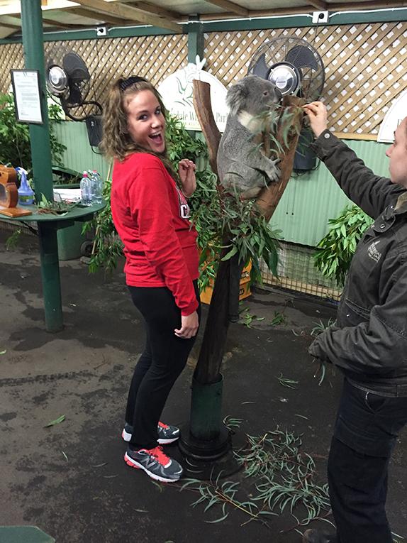 An intern meets a koala in Australia