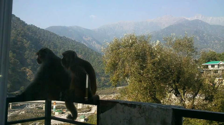 Silhouette of monkeys near the Himalayas in India