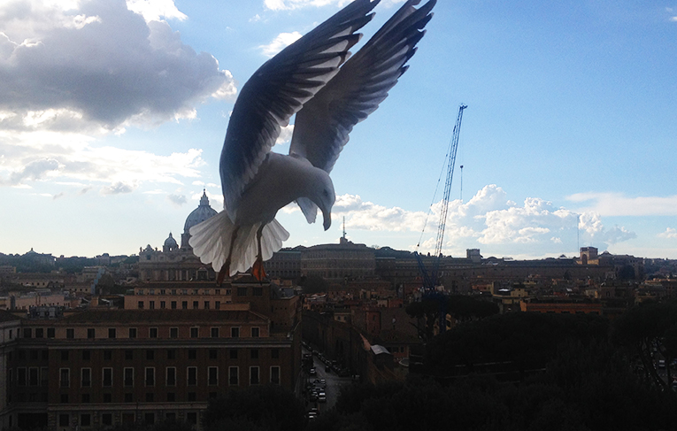 Seagull flying near the Vatican in Italy