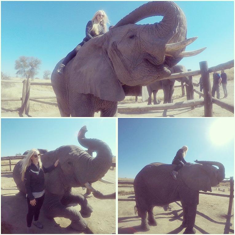 Elephant at Antelope Park, Zimbabwe