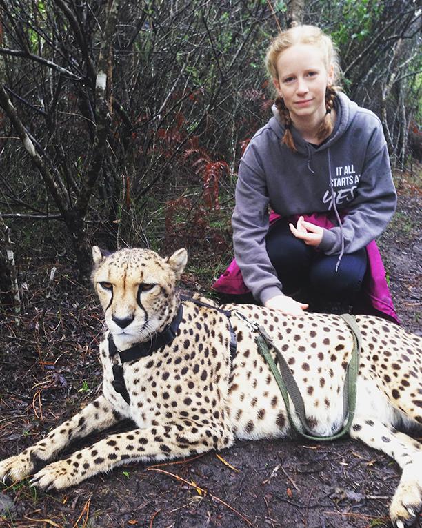 Cheetah Walk in Plettenberg Bay, South Africa