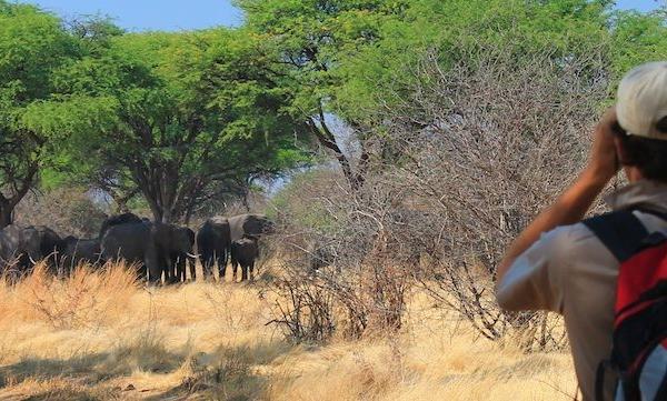 Wildtrax Explorations Botswana: Wildlife Conservation Internship