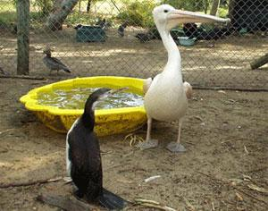 Animal Care in a Wildlife Rehabilitation Center in Australia | travellersworldwide.com