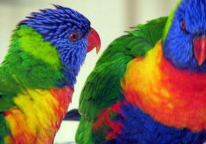 Wildlife Conservation in 2 Centers in Australia | Travellersworldwide.com