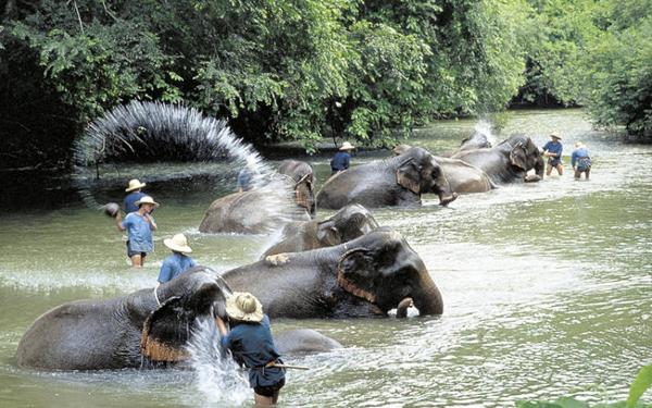 fun elephants interesting thai thailand culture
