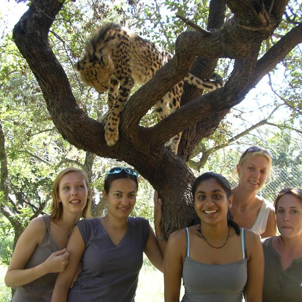 Volunteer Project - Cheetah Conservation