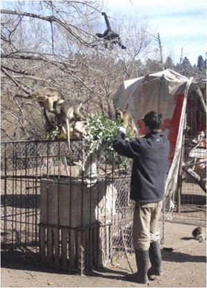 Monkey care, rescue and rehabilitation in Argentina