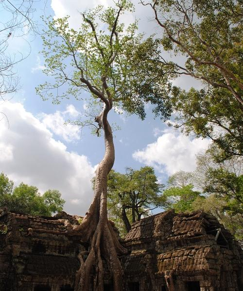 Explore ancient temples in Siem Reap on TEFL Experience