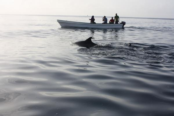 Volunteers watching a dolphin swim nearby their boat