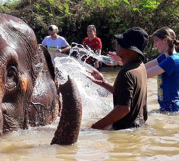 Elephant Conservation Elephant Nature Park Surin Project