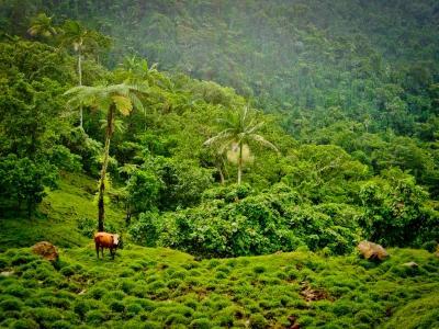 Samoan scenery, taken by a Projects Abroad Volunteer