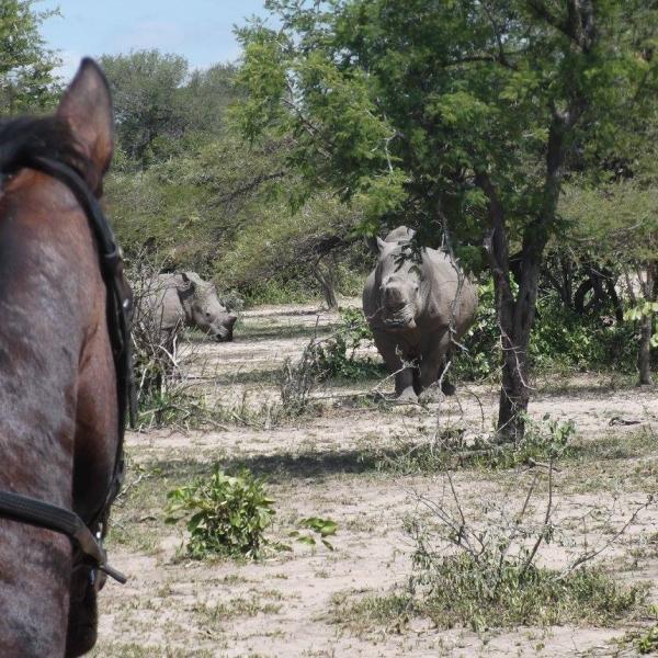 Rhino sighting on horseback