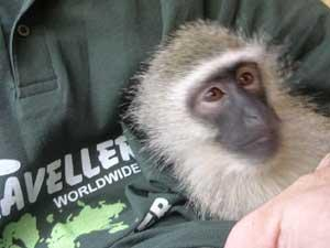 Care for Animals at a Wildlife Rehabilitation Center in South Africa | travellersworldwide.com