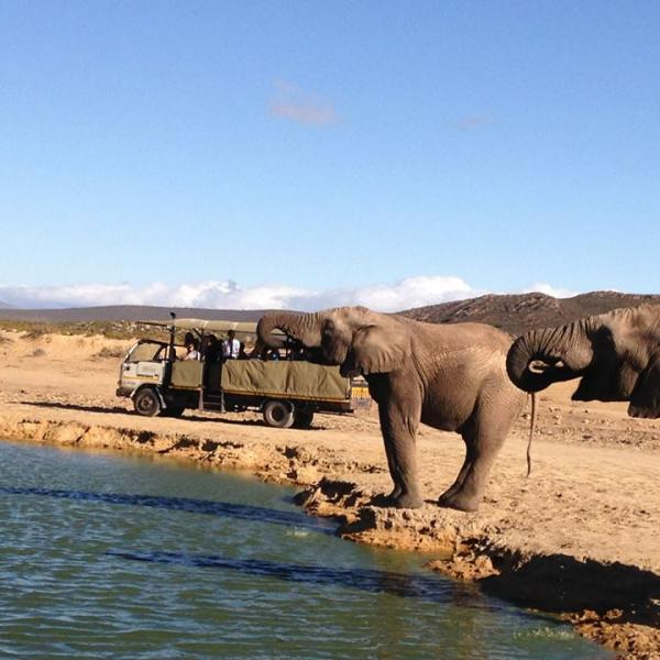 Elephants at Aquila Game Reserve