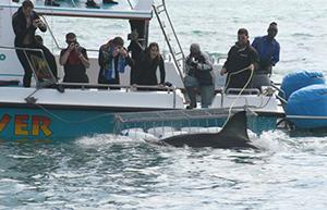 Conservation: Multi Marine with Whales, Sharks and Dolphins in South Africa | travellersworldwide.com