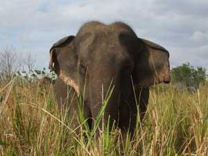 Elephant Conservation in Wasgamuwa National Park, Sri Lanka | travellersworldwide.com