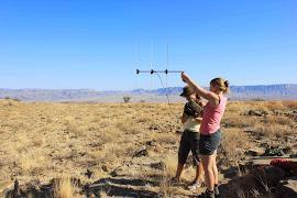 Tracking cheetah Namibia