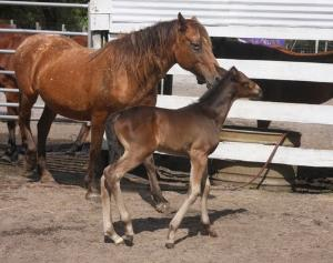 Care for and Rehabilitate Abused Wild Mustangs in Florida, USA | travellersworldwide.com