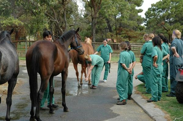 Veterinary Science at Murdoch University
