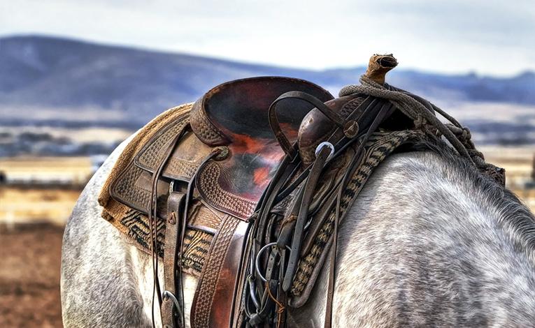 Saddle on horse.