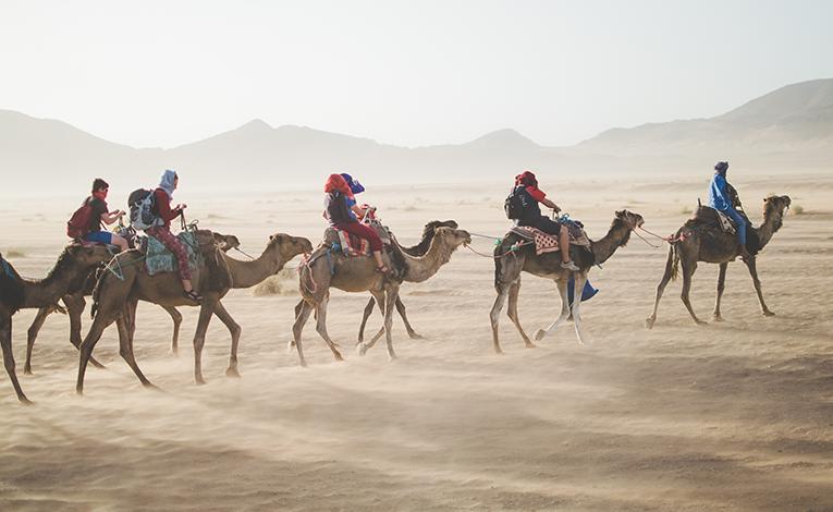camel caravan through the desert