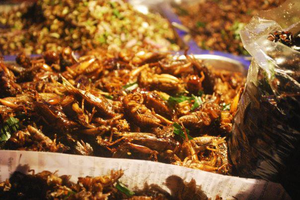 Crunchy cooked crickets
