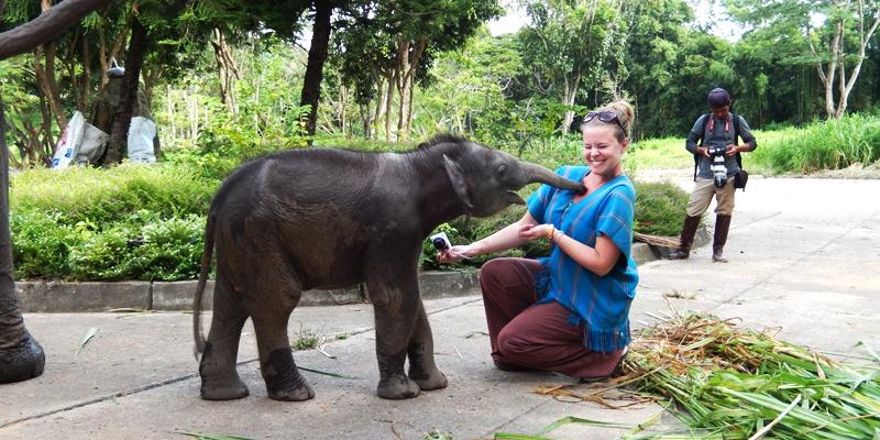 Girl getting tickled by an elephant
