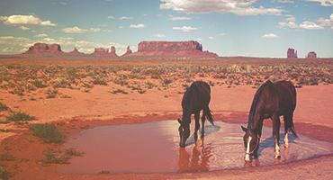 Two horses drinking from a puddle in the desert