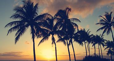 Palm trees at sunset in Hawaii, USA