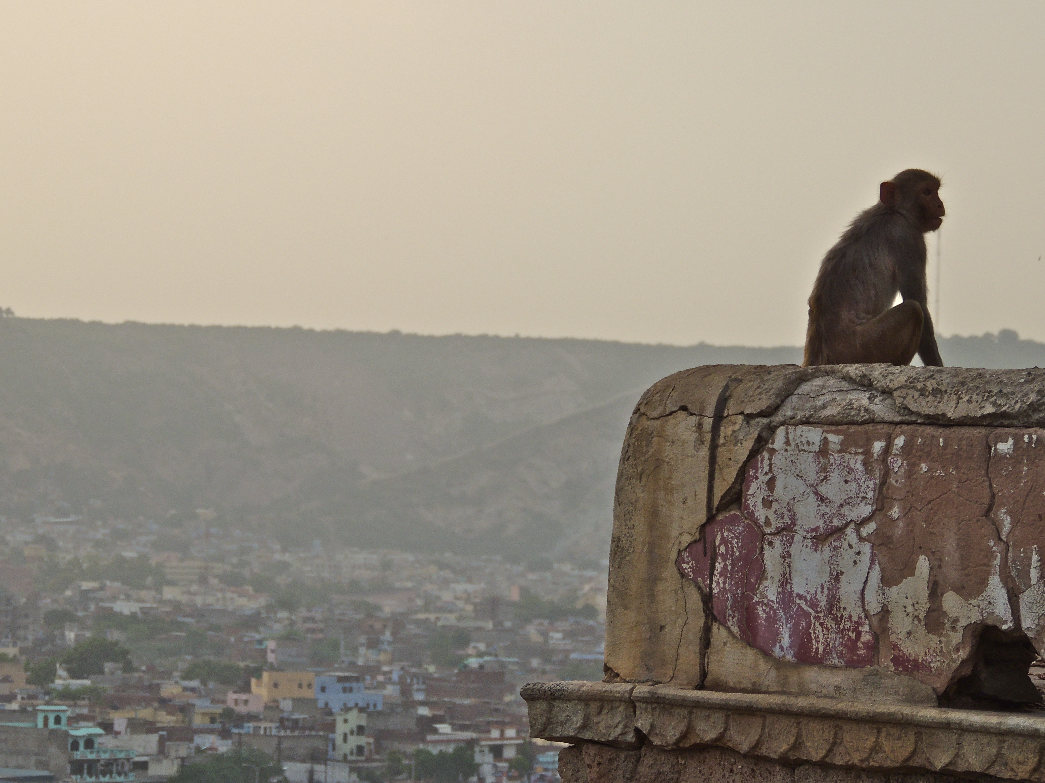 A view from Jaipur's Monkey Temple in India