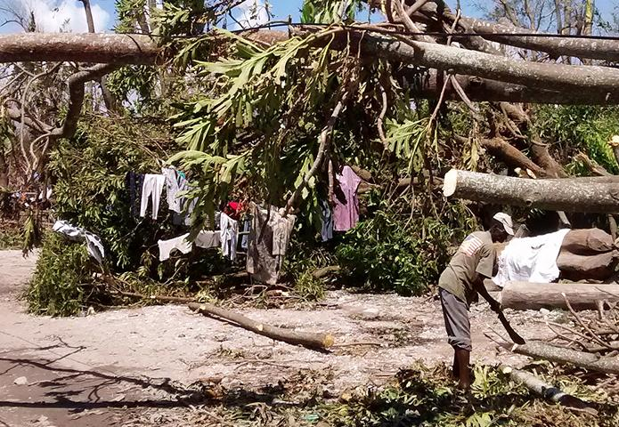 Uprooted trees and destruction in Les Cayes, Haiti following Hurricane Matthew