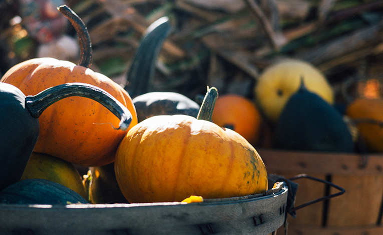 Close-up photo of harvested pumpkins