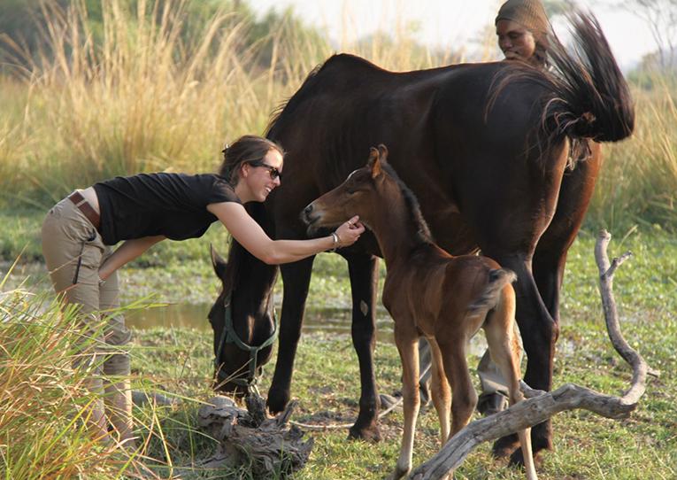 An intern looking after a foal, Okavango Horse Safaris