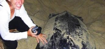 Leatherback Turtle Experience
