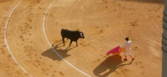 Matador and bull in the ring