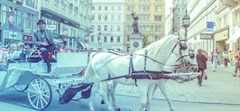 Horse transport in Austria