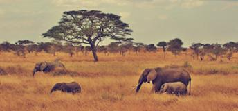 Wildlife in Tanzania