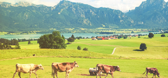 The Allgäu region in Swabia in southern Germany.